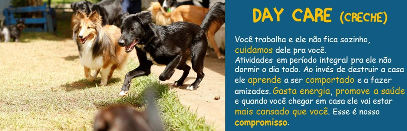 allphapackdogcare-daycare-para-caes