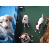 creche canina daycare Barra Funda