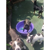 daycare de cães Barra Funda
