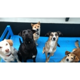 onde encontrar creche canina daycare Barra Funda