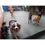 quanto custa hostel de pets Barra Funda